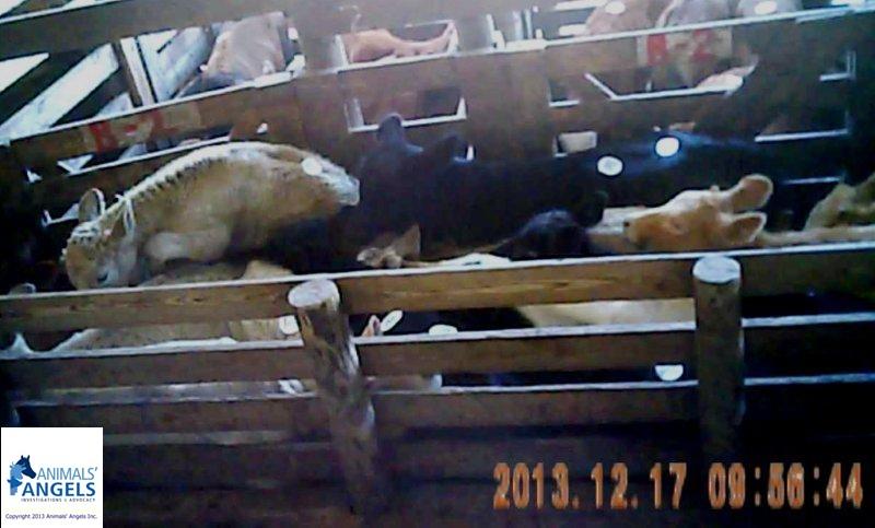 Sumter County Farmers Market, Webster, FL 12/17/13 | Animals