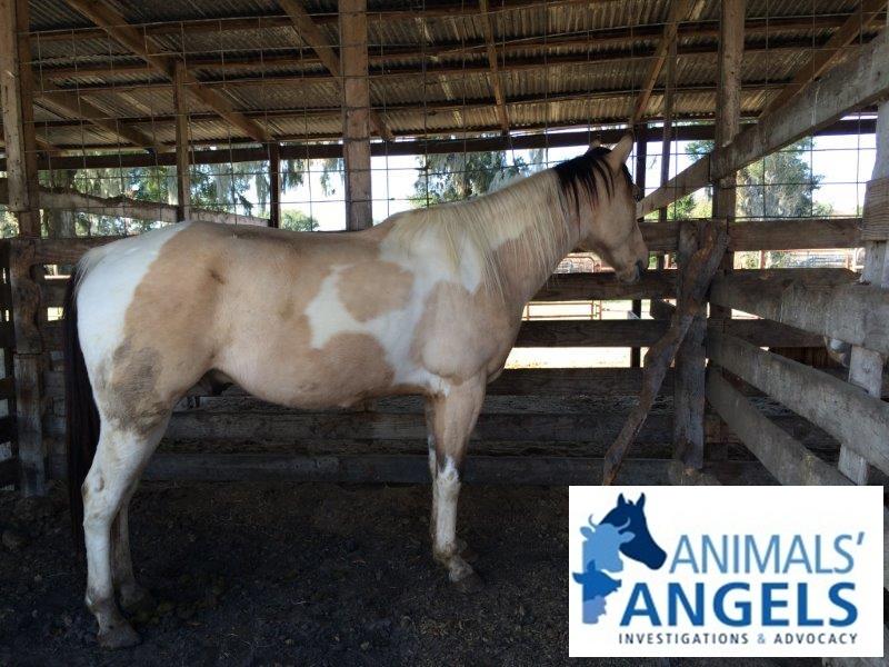 Florida Classic Horse Sale, Ocala, FL 1/17/15 | Animals