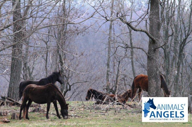 backyard breeder haymarket va 4 26 13 animals angels north