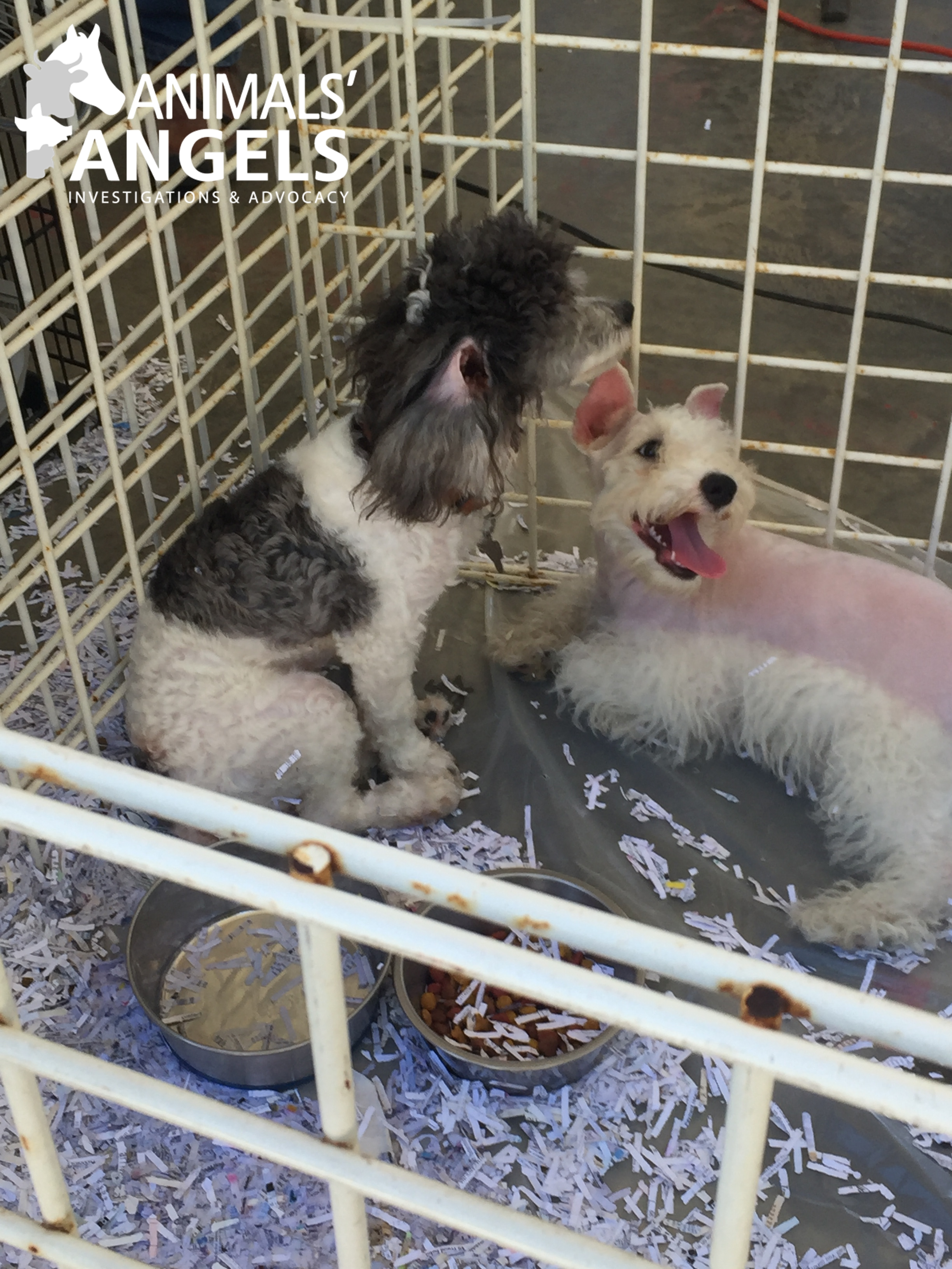 """Animals throughout """"Dog Alley"""" are heavily discounted on this last day of the flea market, some up to half price, as the sellers do not want to take any of ..."""