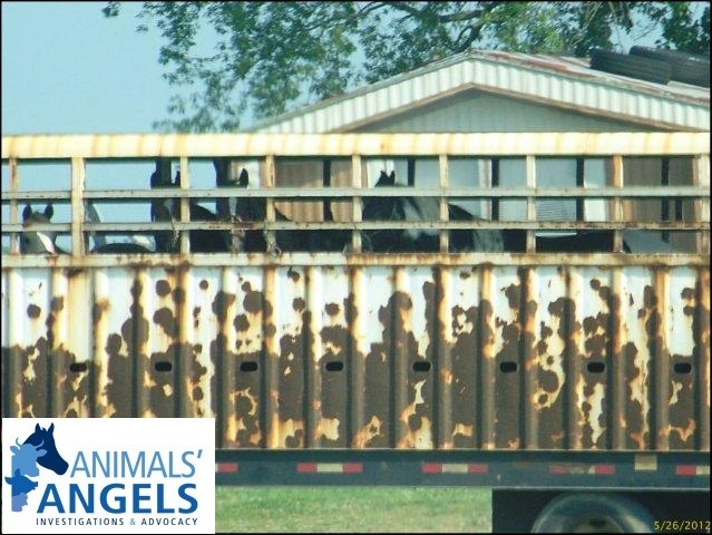 Smith Grove Auction, KY 5/26/12 | Animals Angels - North America