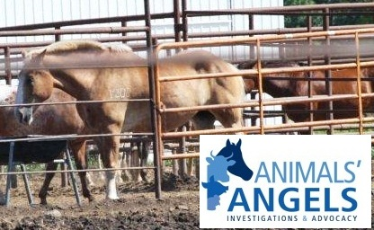 Image result for tongen horse supply