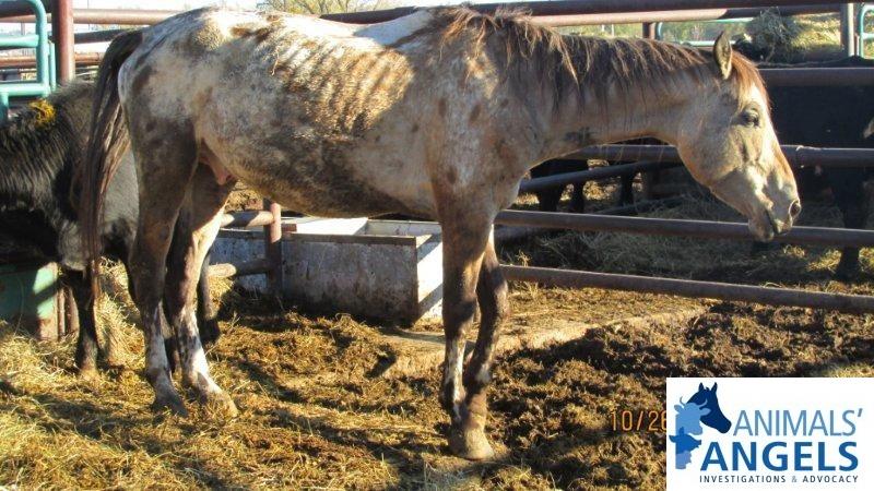 Billings Horse Sale, MT, 10/26/13 | Animals Angels - North