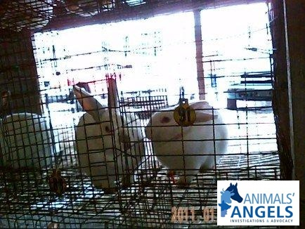 Middleburg Livestock Auction, Middleburg, PA 01/11/2011
