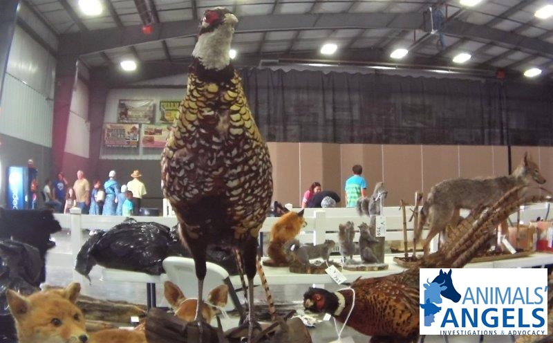 Exotic Animal Auction, Mt Hope, OH 9/13/18-9/15/18 | Animals