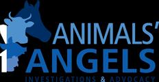 Animals Angels - North America